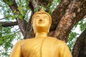 Buddha statue under po tree in thai temple — Stock Photo