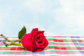 Red rose with water drops on  plaid fabric background — Stock Photo