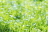 Abstract The natural colors and star bokeh — Fotografia Stock