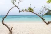 Heart-shaped tree on a beach overlooking the sea  at koh rok, la — Stock Photo