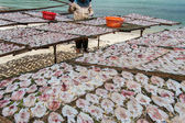 Dried squid Traditional in the sun in a idyllic fisherman villag — Stock Photo