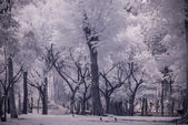 Infra-red photo Landscape garden tree and grass — Stock Photo