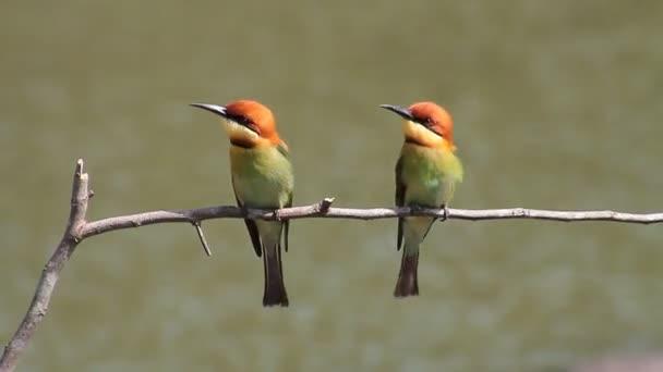 Birds flying Stock Videos, Royalty Free Birds flying ... - photo#13