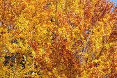 Autumn Carpathian forest — Stock Photo