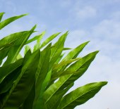 Closeup photo of long green leaves against sun and blue sky — Stock Photo