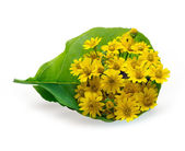 Fresh flower bouquet yellow in leaf top view on white background — Stock Photo