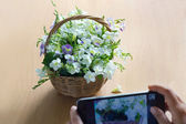 Smartphone in hand take a photo flower — Stock Photo