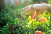 Hand women touch flower in the sunshine — Stock Photo