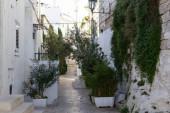 City street full of plants — Stock Photo
