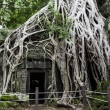 The Ta Phrom temple in Siem Reap — Stock Photo #51939841
