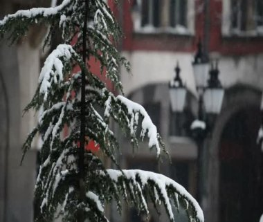 Snowy tree branches — Stock Video