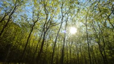 Rays of the sun through the trees — Stockvideo
