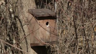 Bird house on a tree — Stock Video