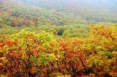 Fall at the Far East Russia — Stock Photo