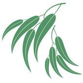 Eucalyptus — Stock Vector