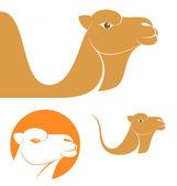 Camel — Stock vektor