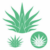Agave — Stock Vector