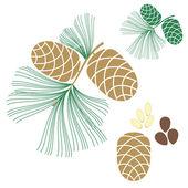 Pine cone. Cedar tree — Stock Vector