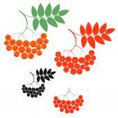 Set of rowan berries and leafs — Stock Vector