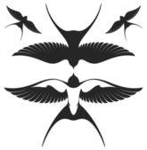 Swallows set — Stock Vector