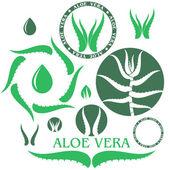 Aloe vera — Vector de stock