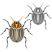 科罗拉多甲虫 — 图库矢量图片