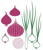 Onion set — Stock Vector