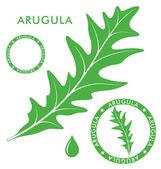Arugula labels — Stock Vector