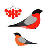 Bullfinch bird — Stock Vector