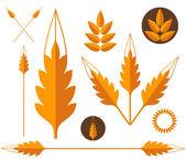 Wheat design elements — Stock Vector