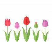 Flat Tulips Set — Stock Vector