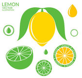 Lemon and Lime icons — Stock Vector