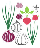 Vegetables set with Garlic, Onion, Radish — Stock Vector