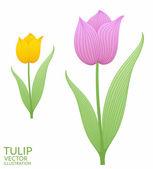 Purple tulip and  Yellow tulip — Stock Vector