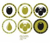 Set di etichette olivo — Vettoriale Stock