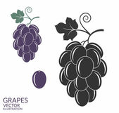 Grapes icon set — Stock Vector