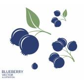 Blueberry illustration . Set — Stock Vector