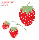 Strawberry illustration with text — Stock Vector