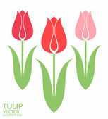 Red Tulips. Set — Stock Vector