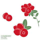 Red Cowberries illustration — Stock Vector