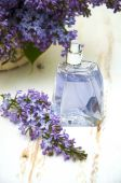 Profumo di lilla — Foto Stock