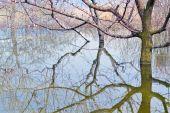 Reflexión — Foto de Stock