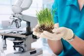 Grass grown in the laboratory — Stock Photo