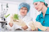 Biotechnology laboratory — Stock Photo