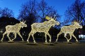 Christmas moose floc made of led light — Stock Photo
