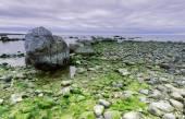 Coastline, stones, gotland — Stock Photo