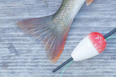 Perch tail closeup and an red float — Stock Photo