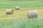Three hay rolls on a field — Stock Photo