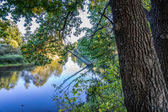 The tree hanging over the river Kirzhach. — Stock Photo