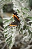 Farfalla su un ramo — Foto Stock